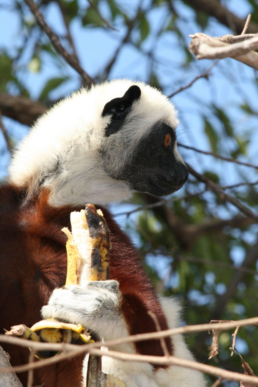 La faune de Madagascar